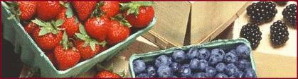 berries_banner besplatna