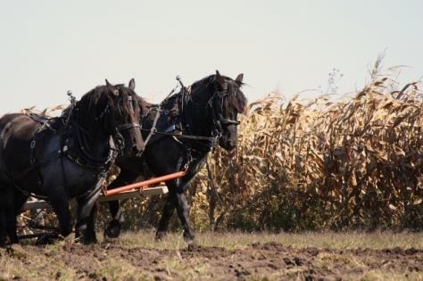 par konja oranje free