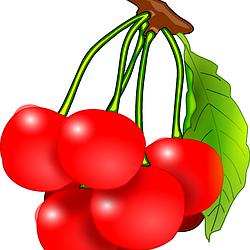 trešnje grozd crtež free